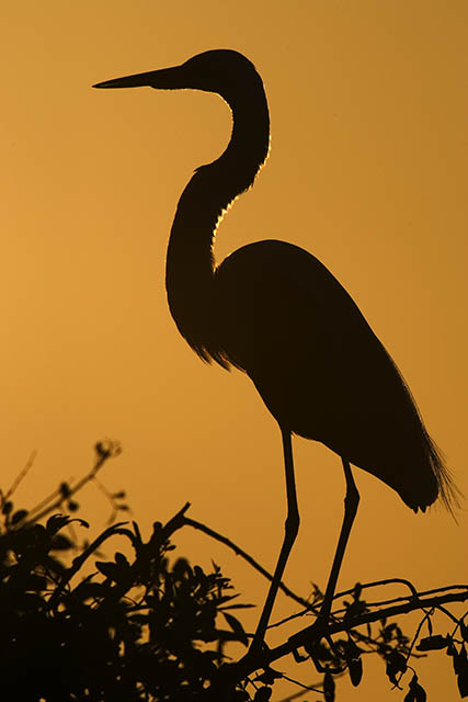 great egret silhouette ii photo george housley photos at
