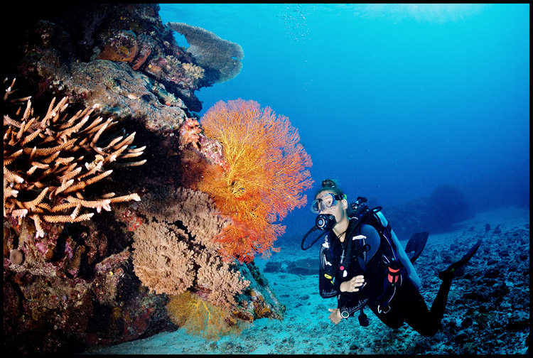 Moso Reefscape and diver