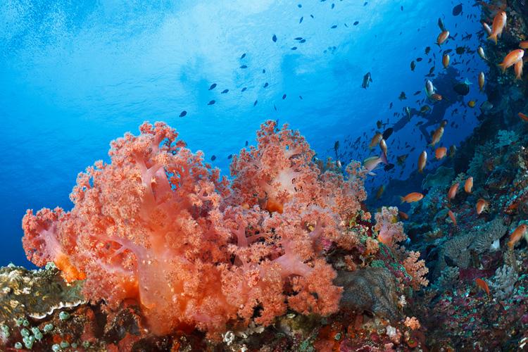 Toyapakeh reefscape