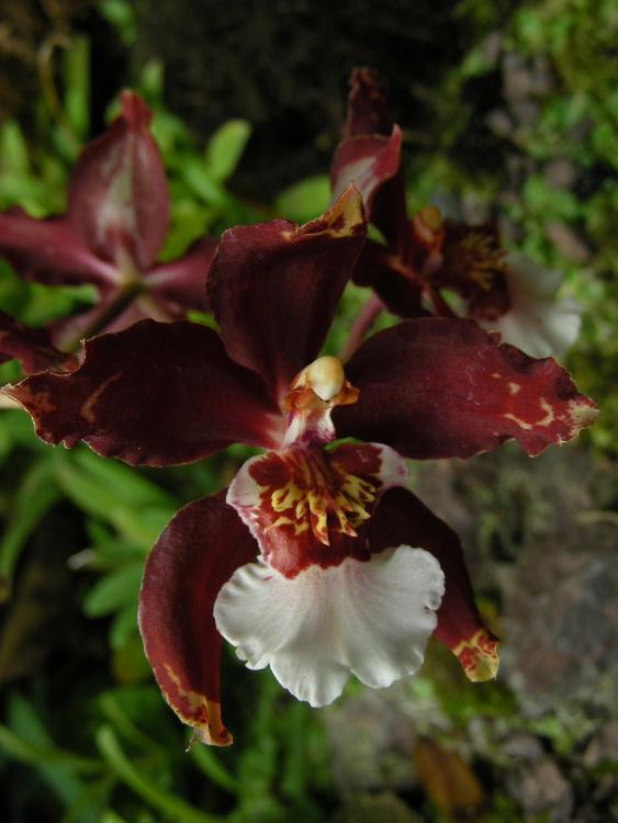 2_1_Orchids at Jardin Botanical de Quito.JPG