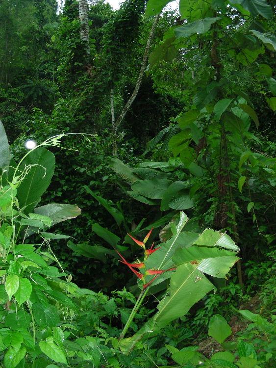 6_5_Rainforest vegetation.JPG