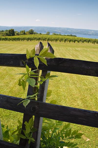 2T1U5386.jpg -Wagner Vineyards at  Lake Seneca, Finger Lakes, NY