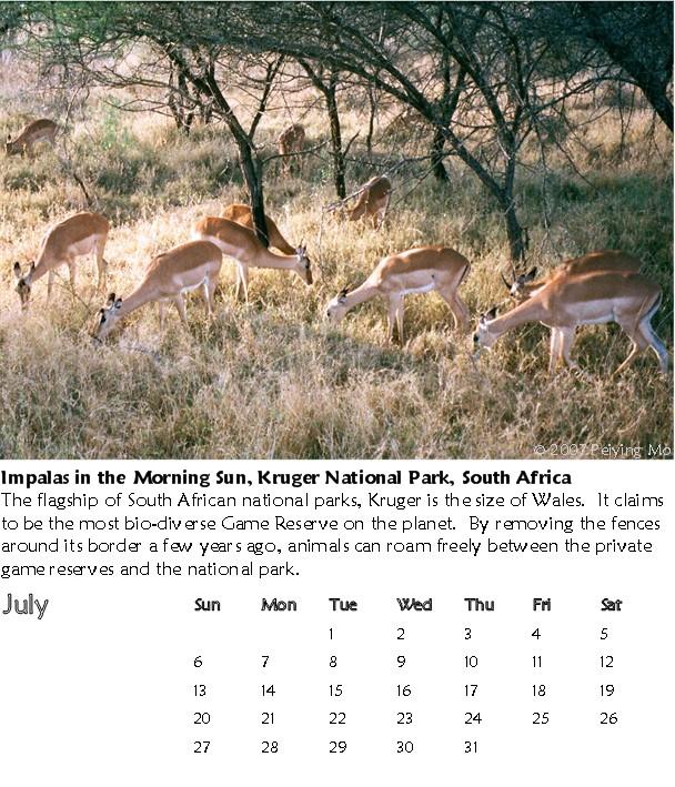 Impalas, Kruger National Park, South Africa