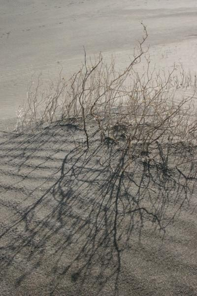 Low-sun Shadow Crosses Sand-ripples