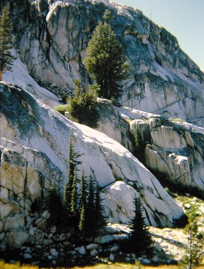 High Wall with Hemlocks