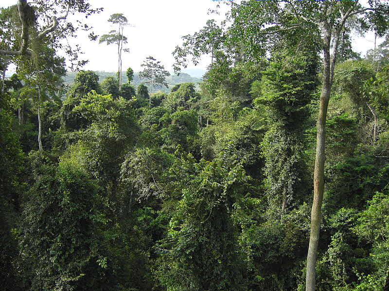 Forest view from the Canopy Walkway, Kakum NP, Ghana