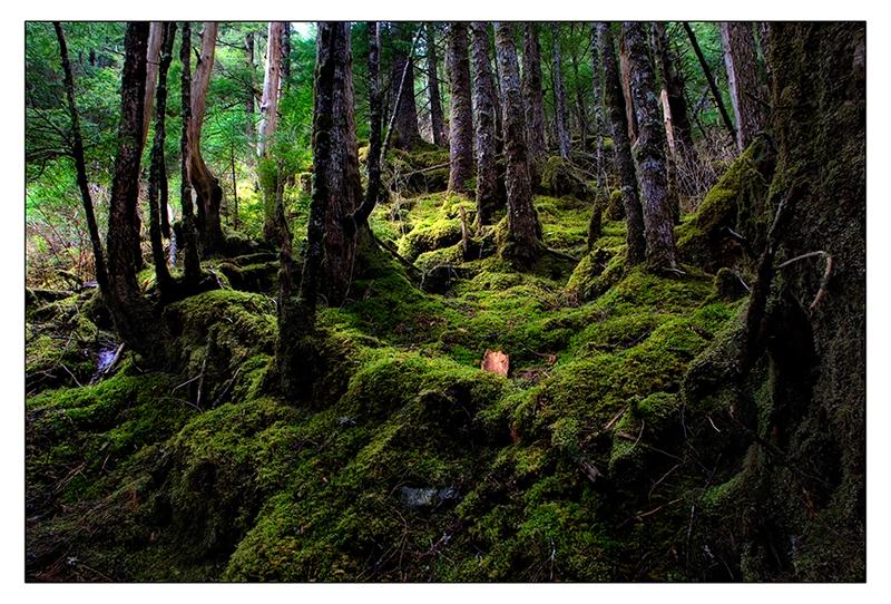 Rainforest #1