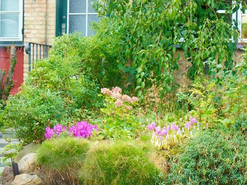 2009-08-31 Small garden