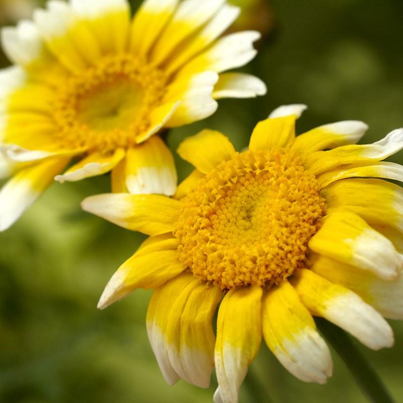 2010-08-20 Flower