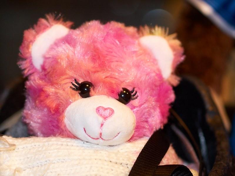 2010-10-03 Bear
