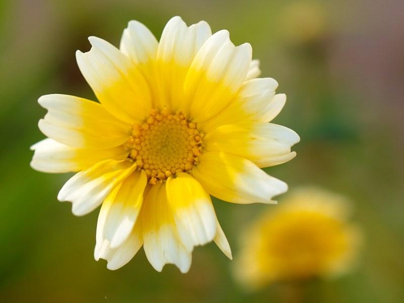 2010-10-09 Flower