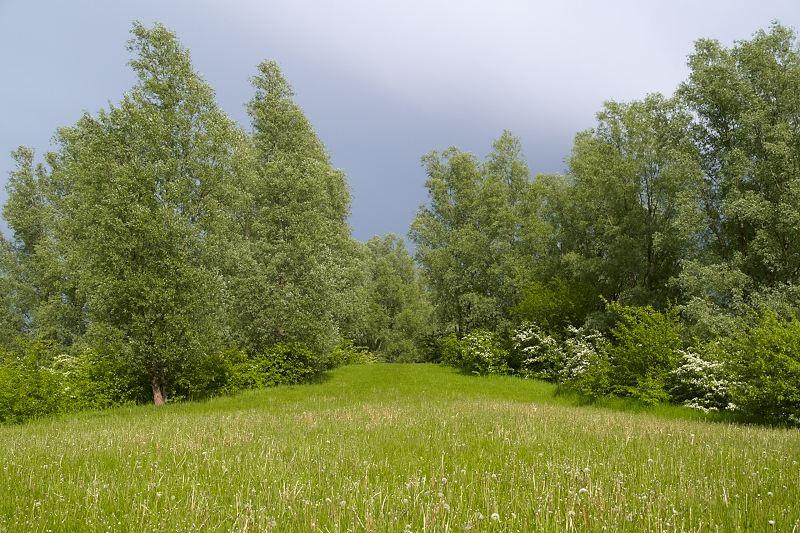 2011-05-25 Trees