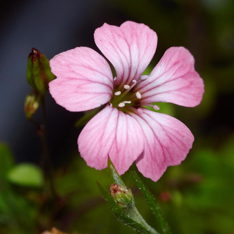 2011-09-11 Flower