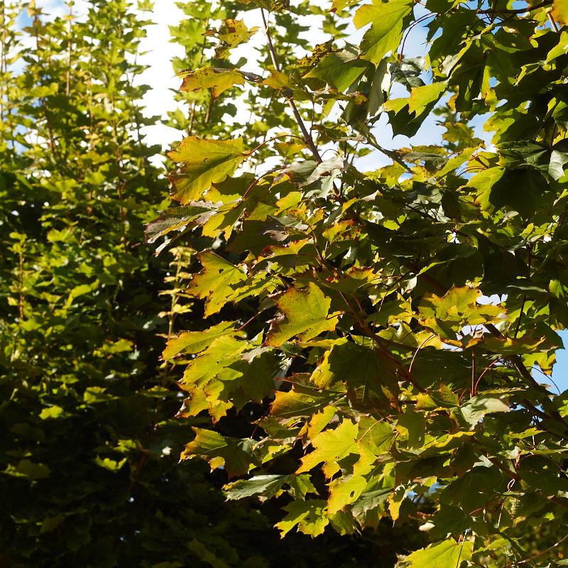 2011-09-17 Leaves