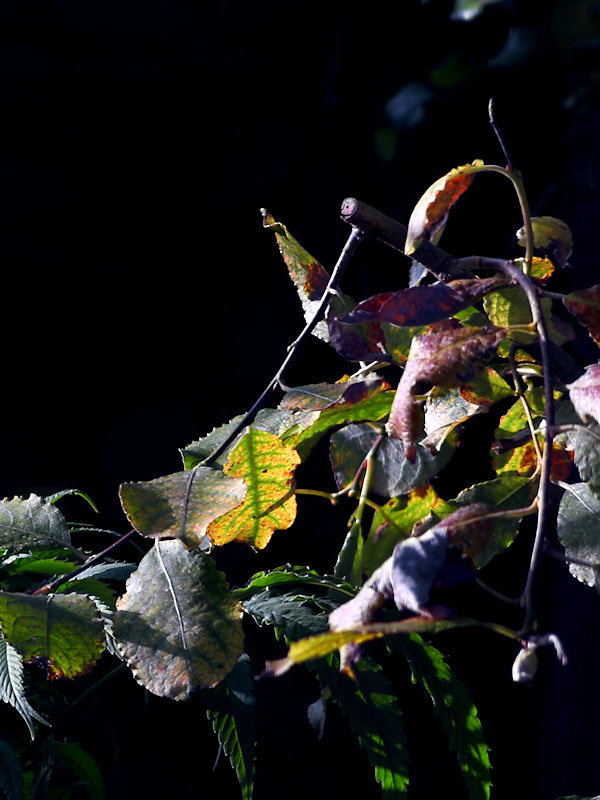 2007-10-26 Leaves