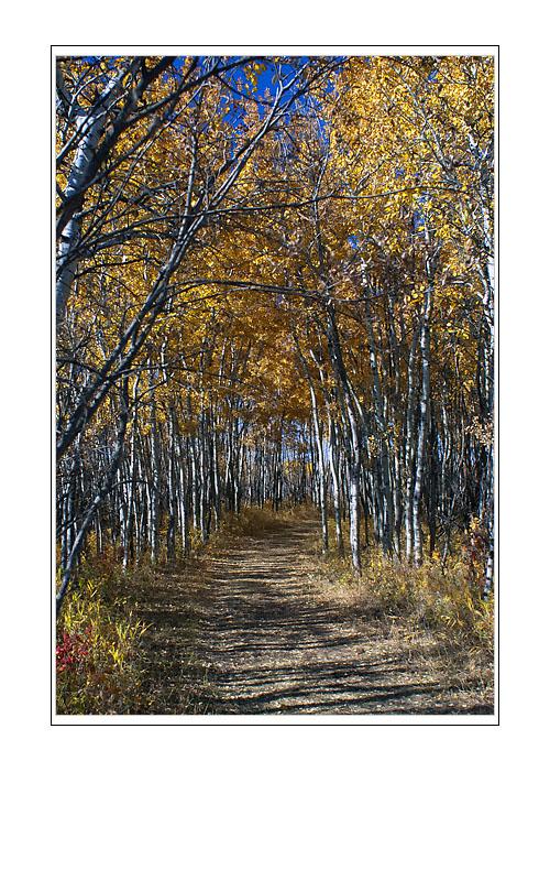 White Butte Walking Trails