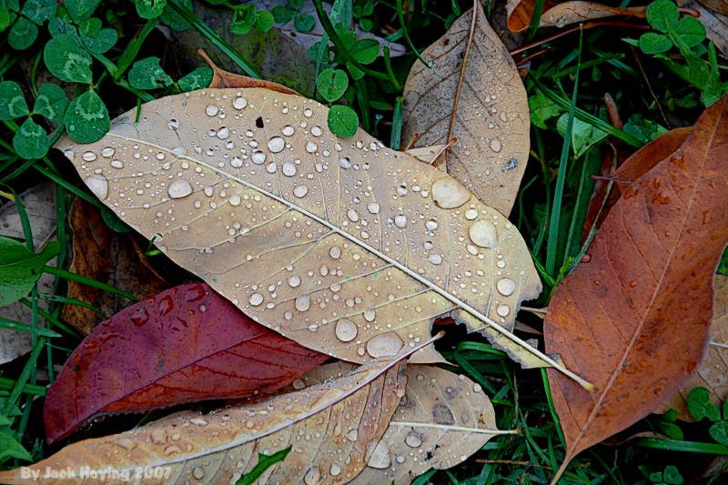 Early Morning Rain Drops