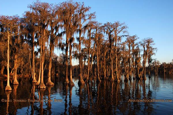 2011 - Banks Lake National Wildlife Preserve, Georgia (#6064)