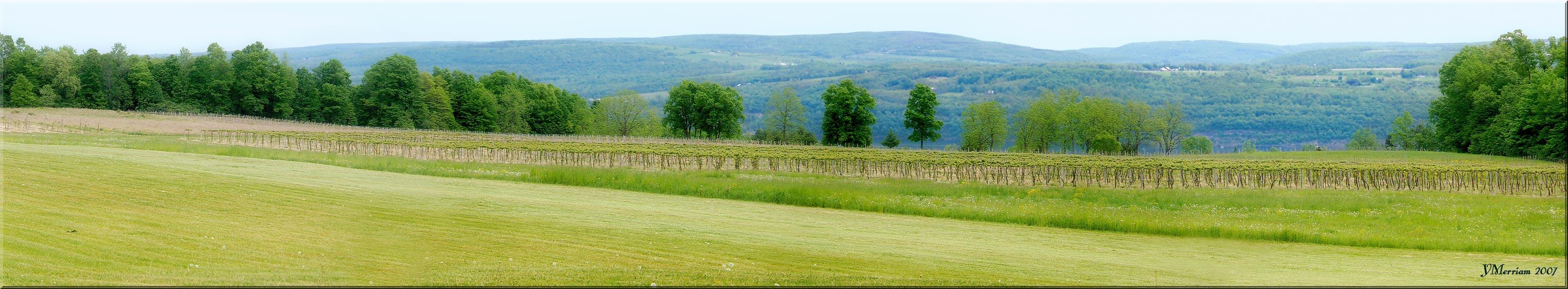 The Vines at Castel Grisch