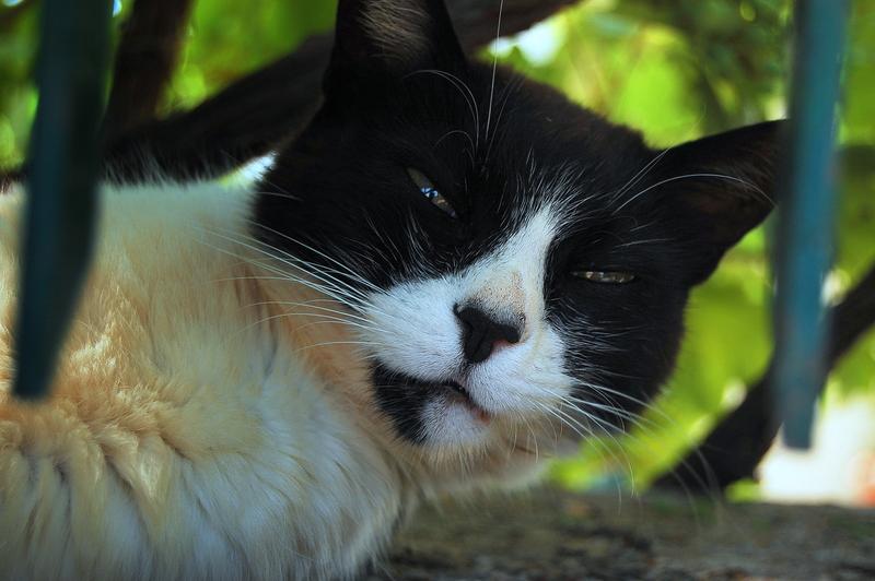 Briciola - My cat