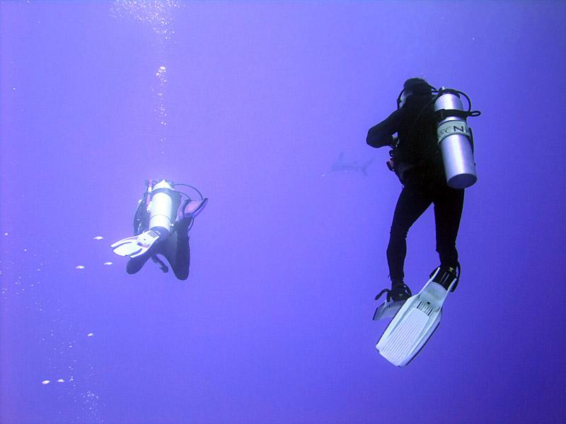 Watching the Oceanic Whitetip 07