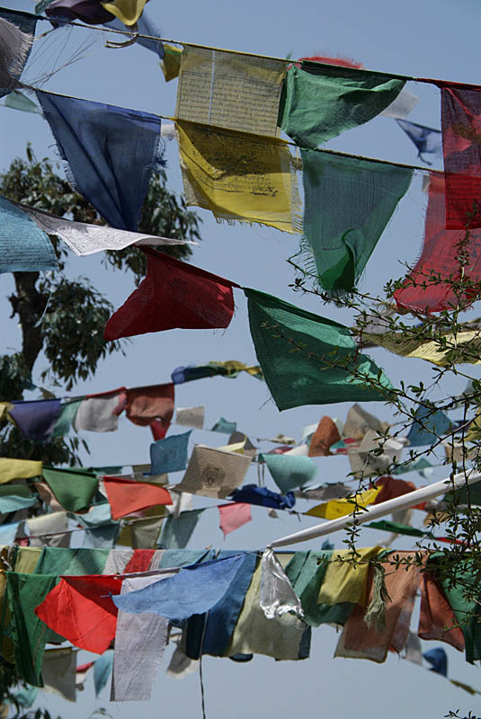Prayer Flags in the Woods Dharamsala 04