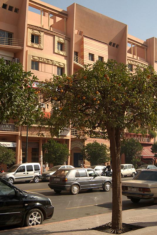 Pavement Orange Trees