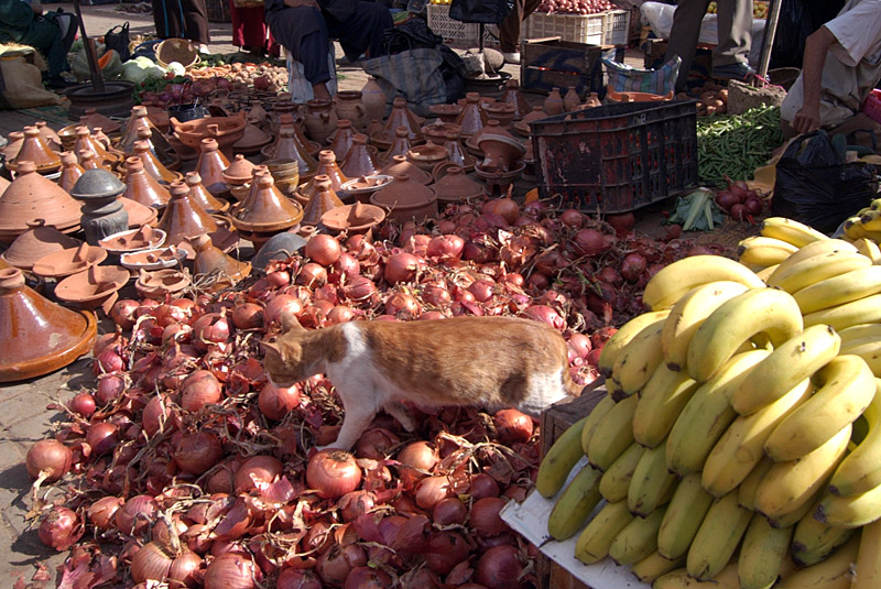 Cat on the Onions