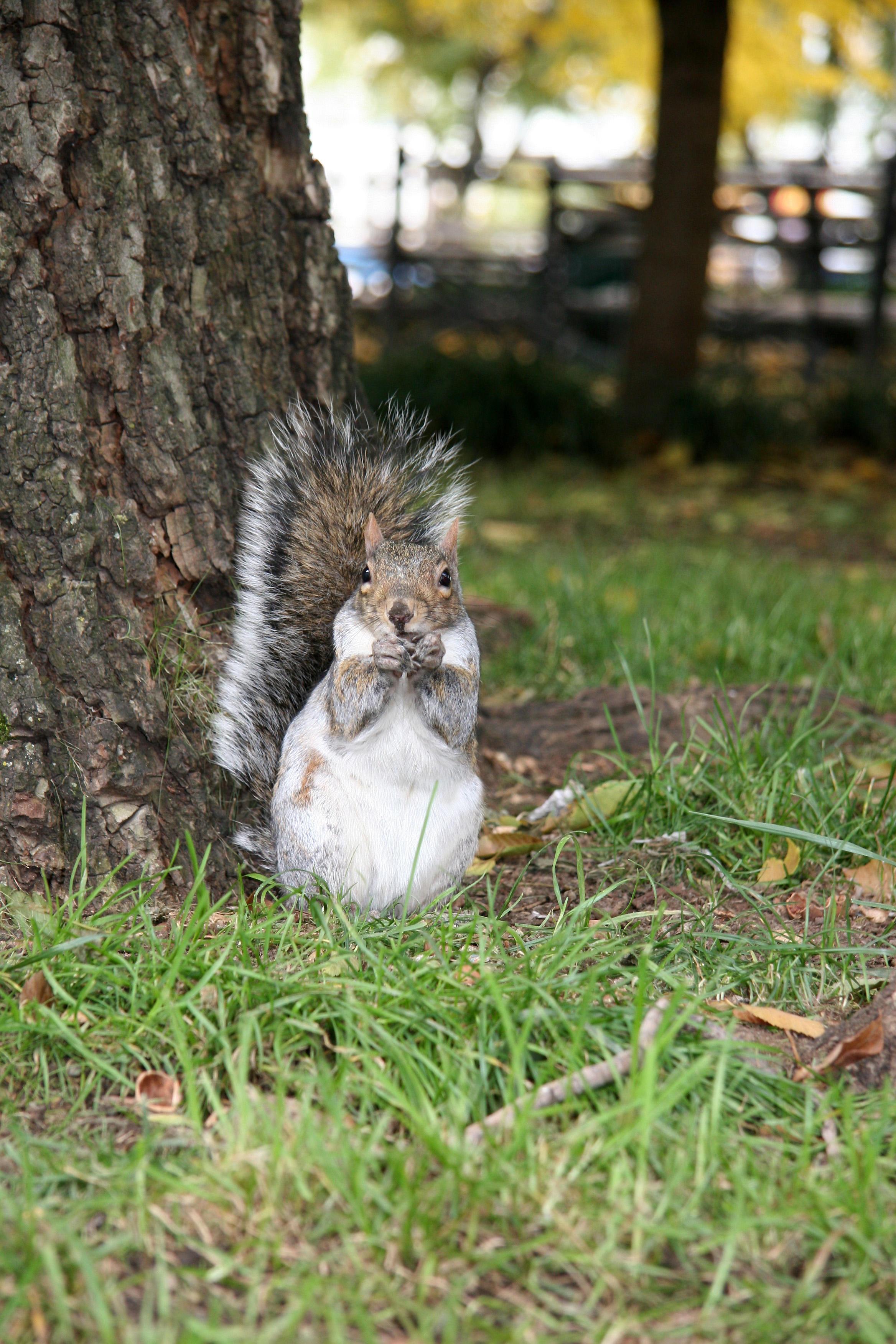 Munching Squirrel