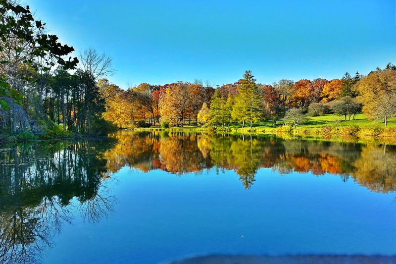 Morton Arboretum, Lisle, IL - fall colors 2012 - Lake Marmo