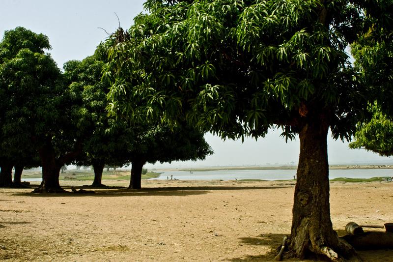 Trees on the beach