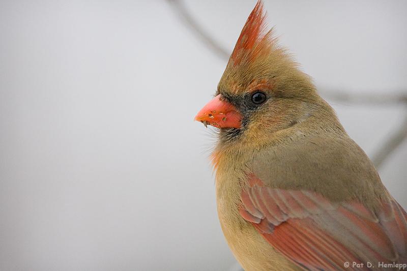 Cardinal stare