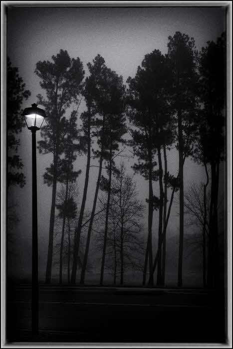 12/04/12 - Dark, Misty Morning