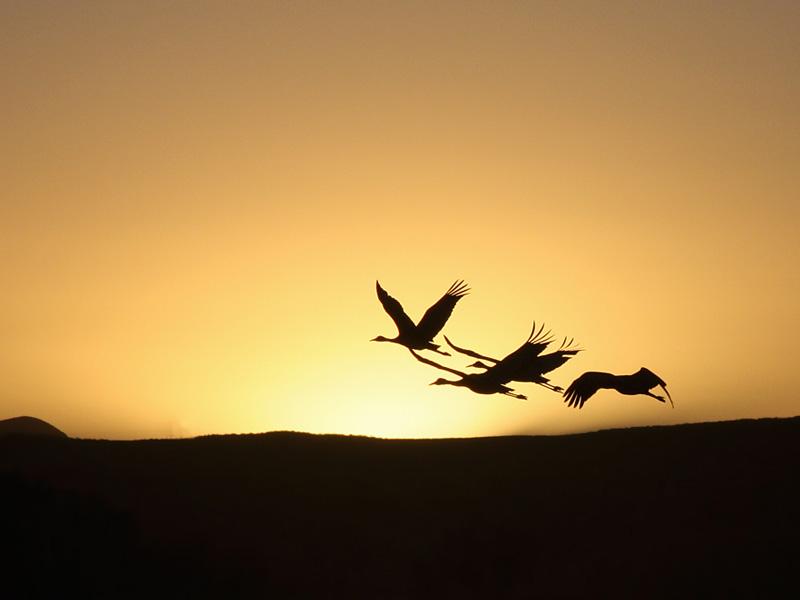 IMG_7585 Cranes.jpg