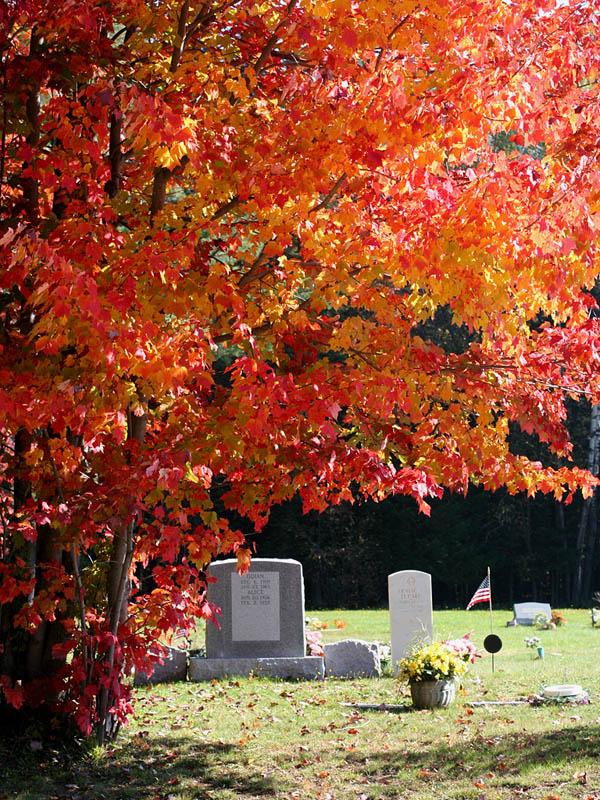 IMG_4711 Foliage.jpg