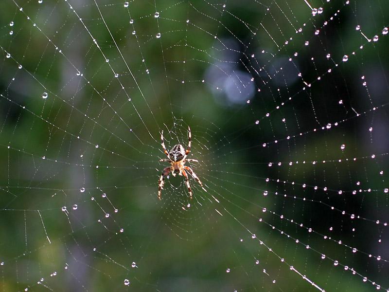 IMG_4030 Spider.jpg