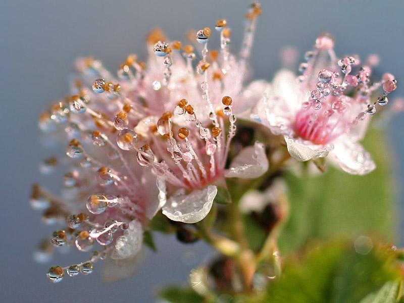 IMG_9534  Dew drops on flower.jpg