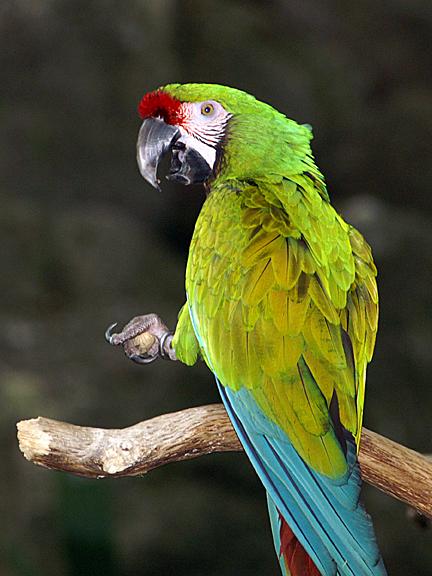 Feathered Friend.jpg