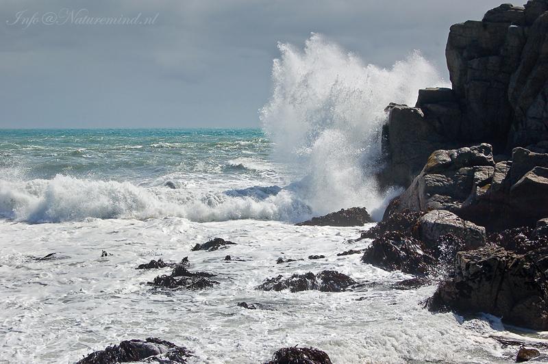 Cape Foulwind PSLR-0821.jpg