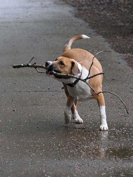 Norton Grabs a Stick