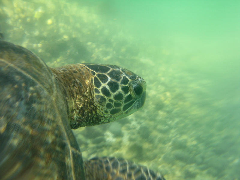 Swimming with Turtles