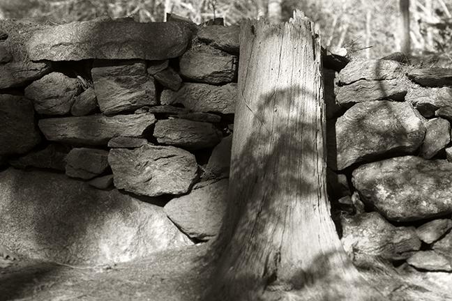 Stone Wall and Stump