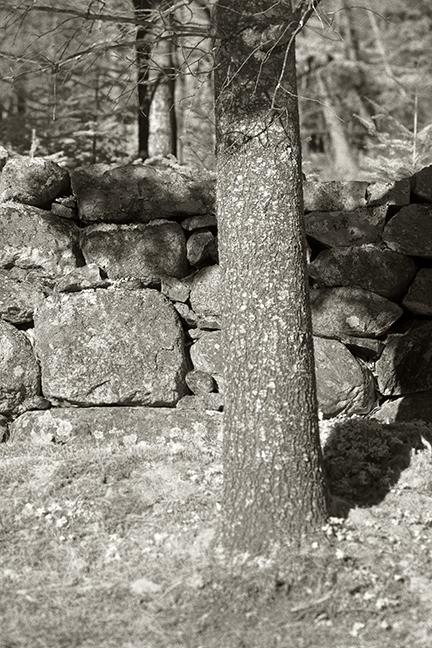 Stone Wall and Tree