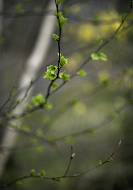 Young Leaves #2