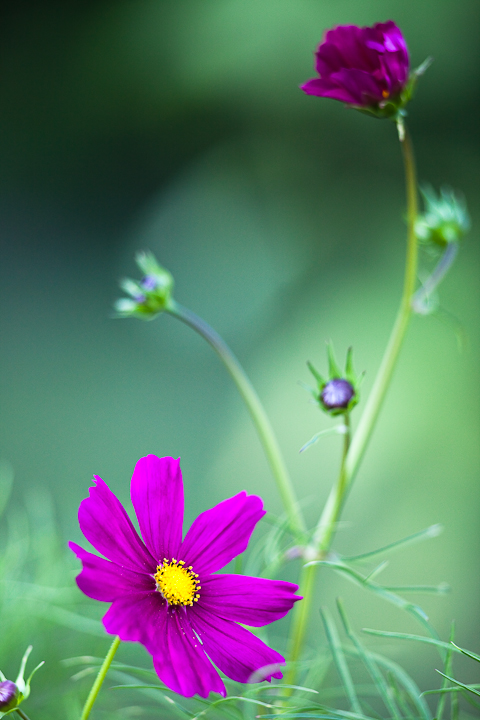 Various Stages of Cosmos