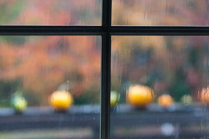 Rainy Autumn Pumpkins #3