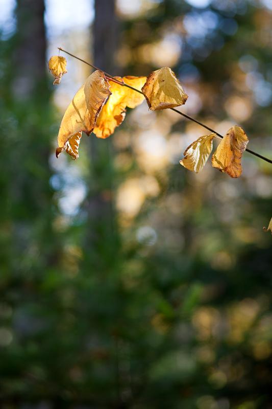 Last Leaves at Birdsacre