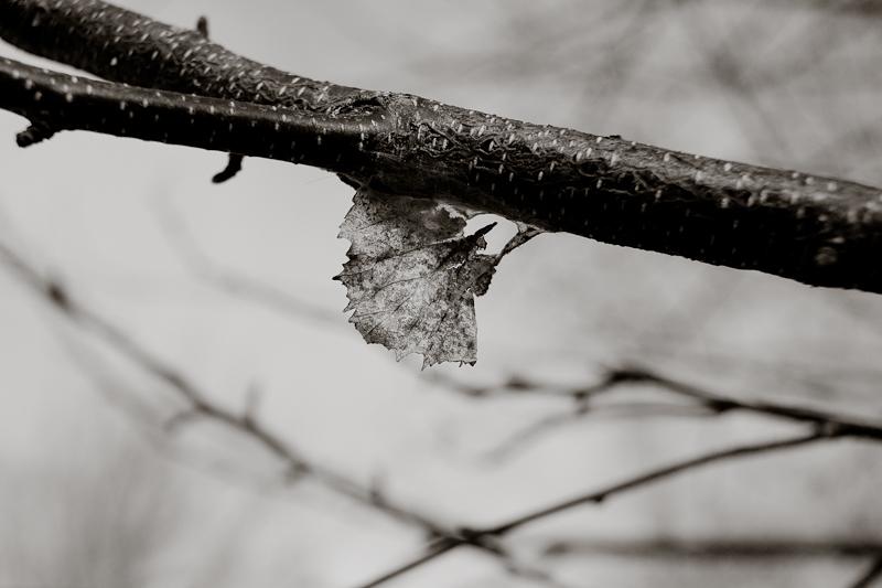 Spring Hanger-on