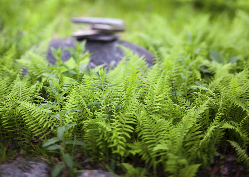 Young Ferns and Piled Rocks
