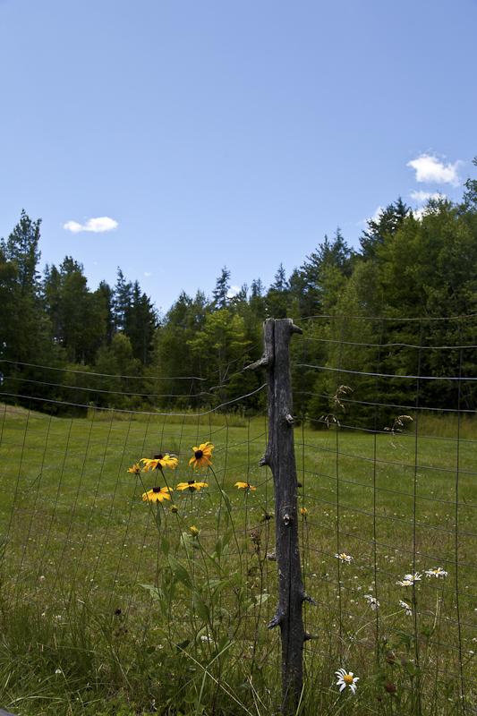 Backyard HDR